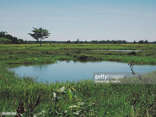scenic view of small ponds amidst grassy field - pequeno lago - fotografias e filmes do acervo