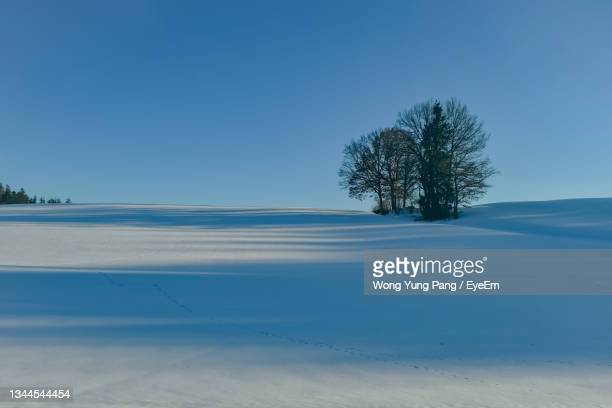 scenic view of snow covered field against clear blue sky - kieferngewächse stock-fotos und bilder