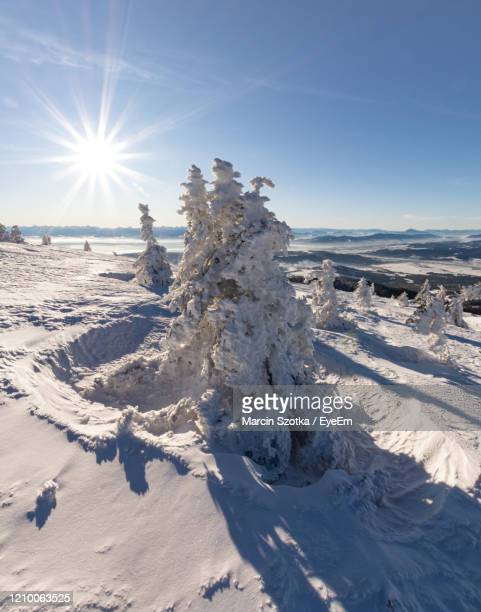 scenic view of snow covered land against bright sun - babia góra mountain stock pictures, royalty-free photos & images
