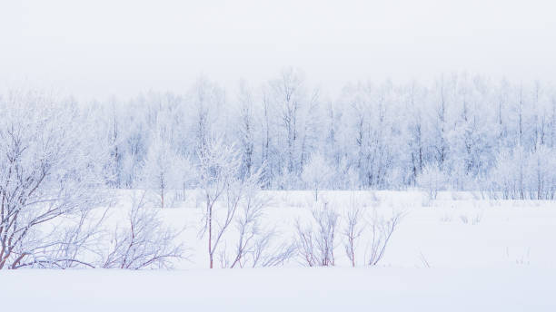Scenic View Of Snow Covered Land Against Sky, Kittil, Finland
