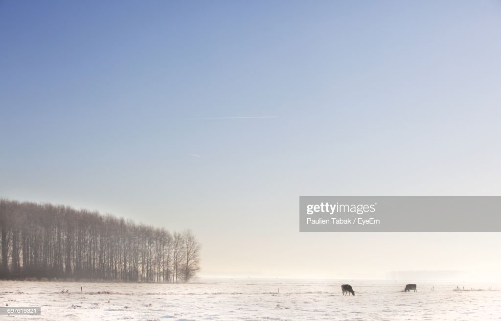 Scenic View Of Snow Covered Landscape Against Sky : Stock Photo