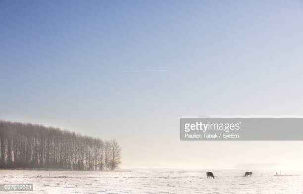 scenic view of snow covered landscape against sky - paulien tabak stock-fotos und bilder