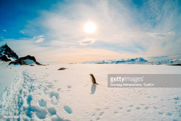 scenic view of snow covered landscape against sky - antarctique photos et images de collection