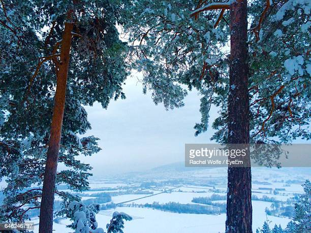 scenic view of snow covered landscape during foggy weather - rachel wolfe stock pictures, royalty-free photos & images
