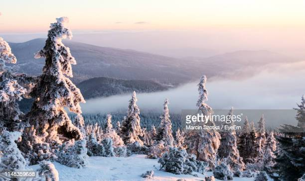scenic view of snow covered mountains against sky during sunset - babia góra mountain stock pictures, royalty-free photos & images