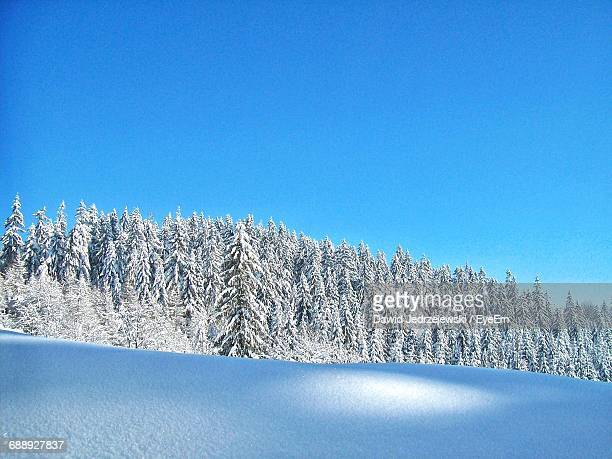 Scenic View Of Snow Covered Pines On Fresh Snow Against Clear Blue Sky