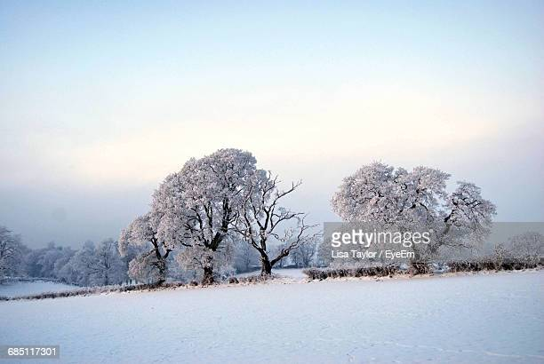 scenic view of snow covered trees on landscape during winter - hillsborough sheffield stock pictures, royalty-free photos & images