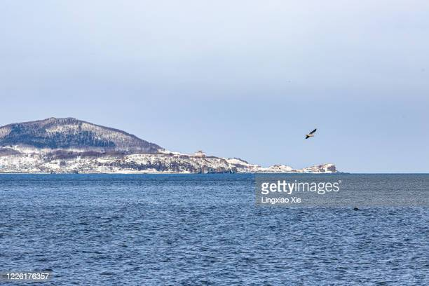 scenic view of snow-covered otaru coastline along sea of japan (east sea), otaru, hokkaido, japan - 冠雪 ストックフォトと画像