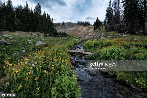 scenic view of stream amidst landscape against cloudy sky - fort collins stock pictures, royalty-free photos & images