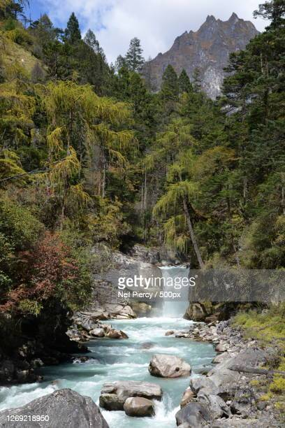 scenic view of stream amidst trees in forest against sky, gasa, bhutan - bhutan stock pictures, royalty-free photos & images