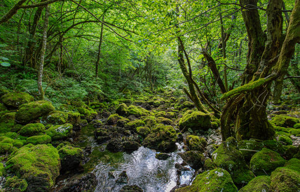 Scenic view of stream amidst trees in forest,Unnamed Road,Bosnia and Herzegovina