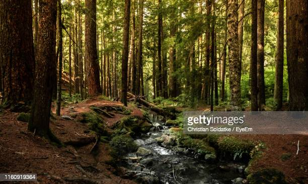 scenic view of stream flowing amidst trees in forest - christian soldatke stock pictures, royalty-free photos & images