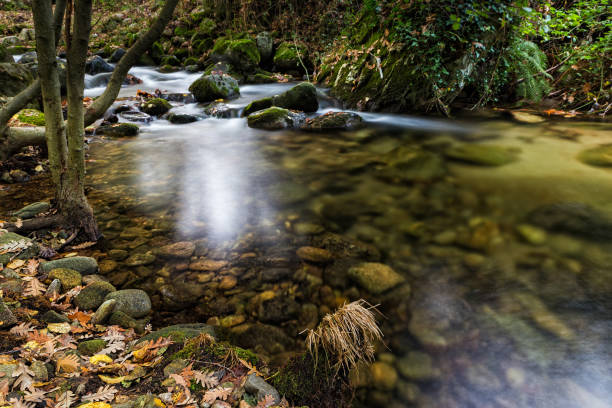 Scenic view of stream flowing through rocks in forest,Cabezuela del Valle,Extremadura,Spain