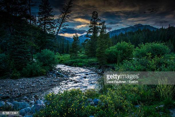 Scenic View Of Stream In Forest Against Cloudy Sky At Dusk