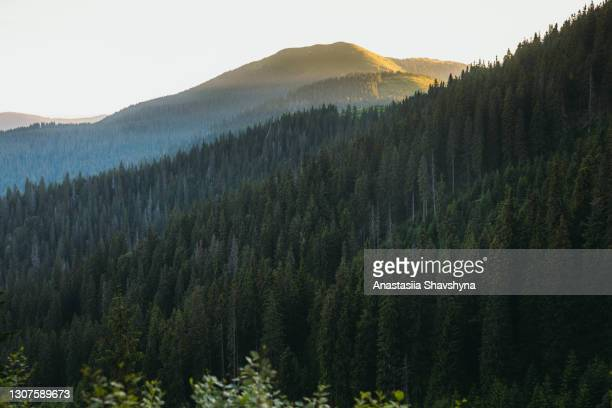 scenic view of summer sunrise in the mountain wilderness - wilderness area stock pictures, royalty-free photos & images