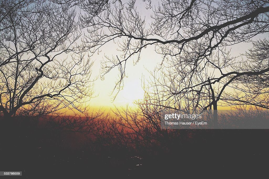 Scenic View Of Sunset From Forest : Foto stock