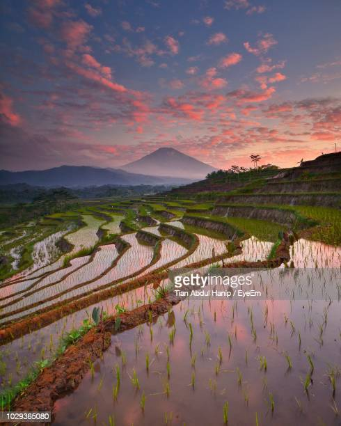scenic view of terraced field against sky during sunset - tian abdul hanip stock photos and pictures