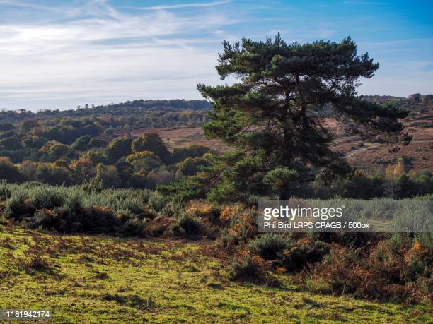 scenic view of the ashdown forest in sussex - high up stock pictures, royalty-free photos & images