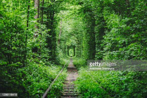 夏の日の出の美しい自然緑の鉄道トンネルの美しい景色 - ウクライナ トンネル ストックフォトと画像