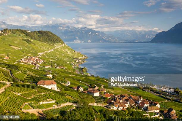 scenic view of the terraced vineyards of le lavaux - unesco stock pictures, royalty-free photos & images