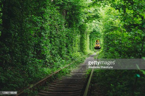scenic view of the train in the beautiful natural green railway tunnel during summer sunrise - ukraine landscape stock pictures, royalty-free photos & images