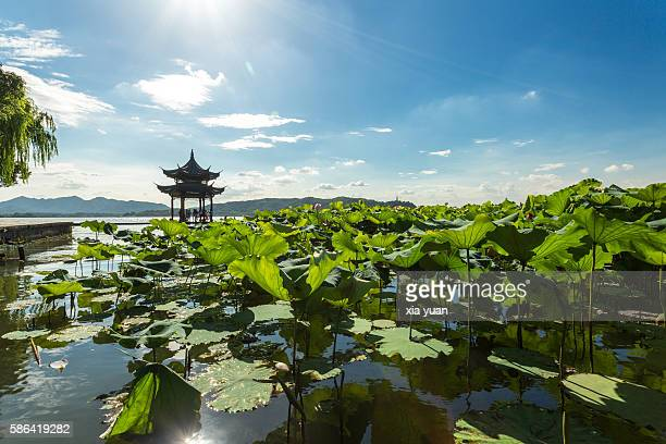 scenic view of the west lake in the summer,hangzhou,china - paisajes de china fotografías e imágenes de stock