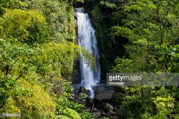 scenic view of trafalgar falls at morne trois pitons national park, dominica, caribbean - dominica fotografías e imágenes de stock