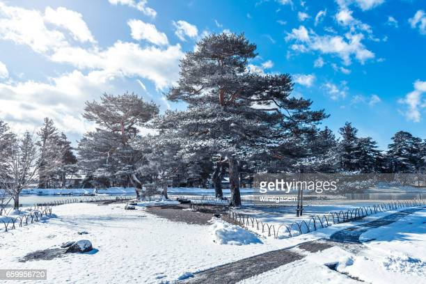 Scenic View Of Tree Against Blue Sky During Winter
