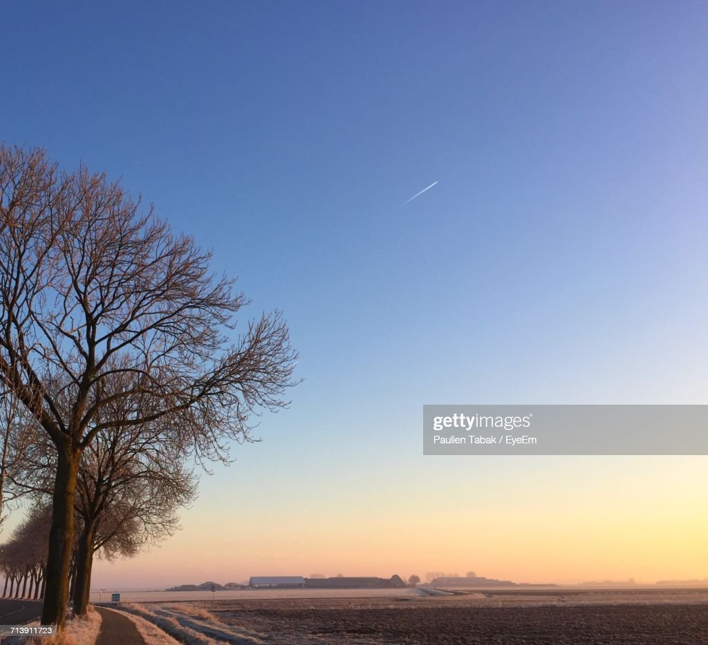 Scenic View Of Tree Against Sky During Sunset : Foto de stock