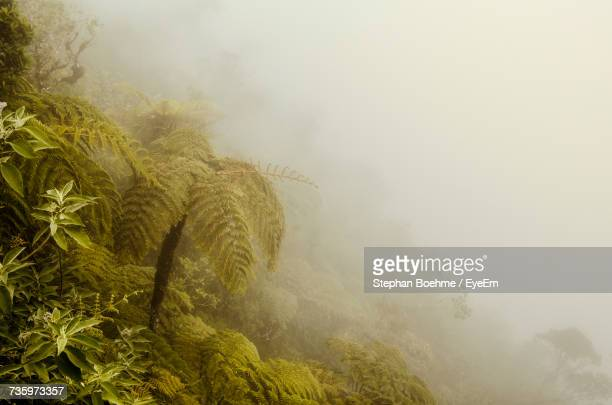 Scenic View Of Tree In Foggy Weather Against Sky