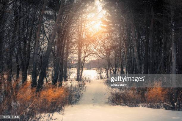 Scenic View Of Tree in Winter