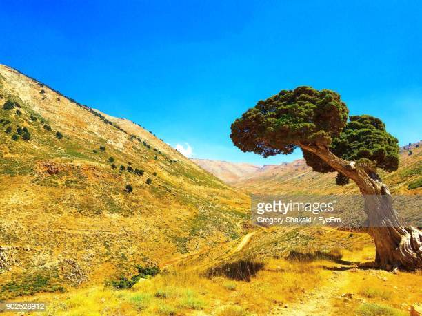 scenic view of tree mountains against blue sky - libanon stock-fotos und bilder