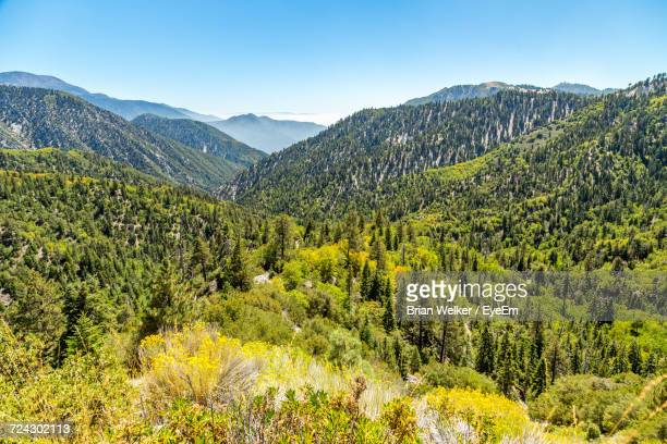 Scenic View Of Tree Mountains Against Clear Sky