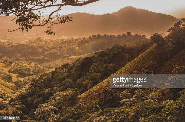 scenic view of tree mountains against sky - dominican republic stock pictures, royalty-free photos & images