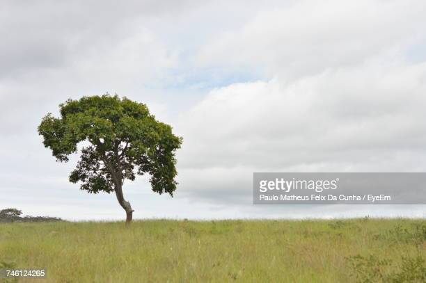 Scenic View Of Tree On Grass