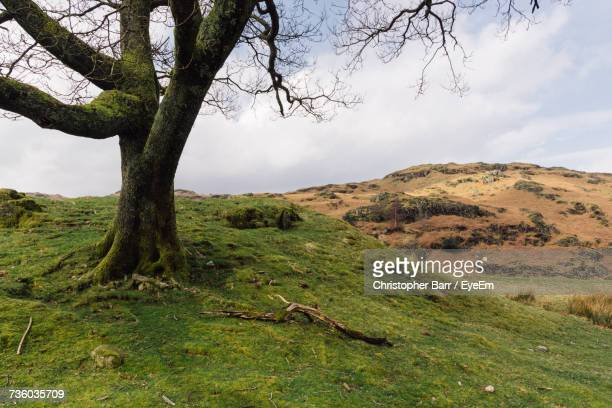 scenic view of tree on landscape against sky - barr stock pictures, royalty-free photos & images