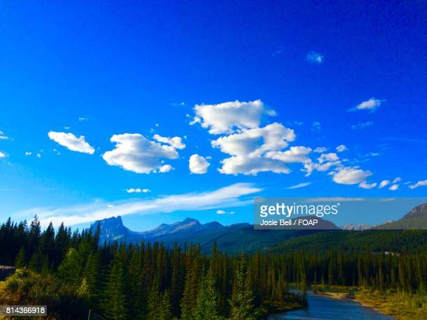 scenic view of trees against blue sky - josie photos et images de collection