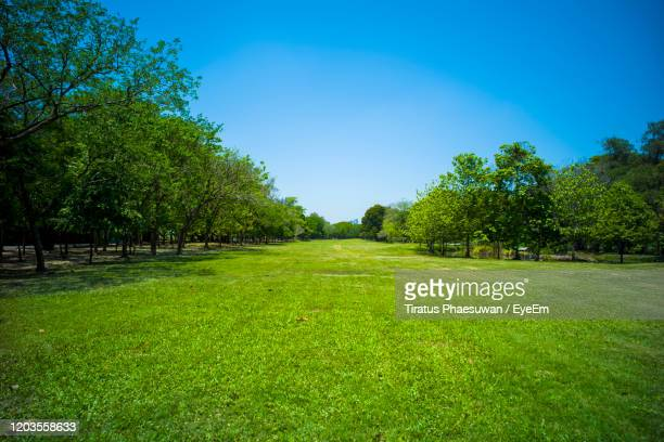 scenic view of trees against clear sky - 並木 ストックフォトと画像