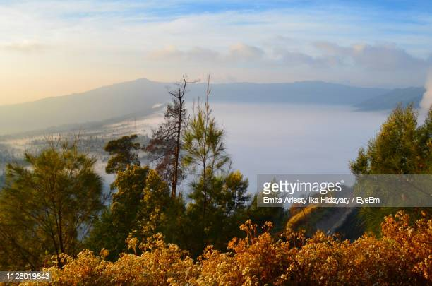 scenic view of trees against sky during autumn - mt bromo stock pictures, royalty-free photos & images