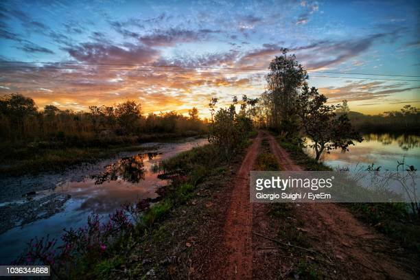 scenic view of trees against sky during sunset - pantanal wetlands stock photos and pictures