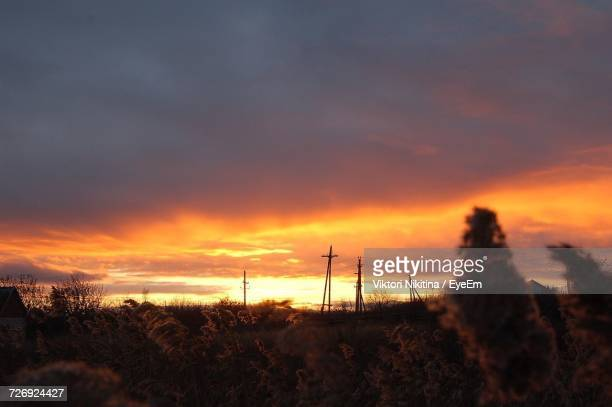 scenic view of trees against sky during sunset - nikitina stock pictures, royalty-free photos & images