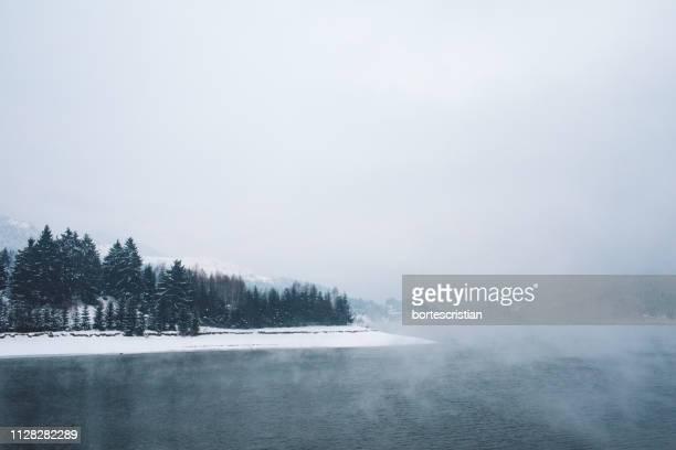 scenic view of trees against sky during winter - bortes foto e immagini stock