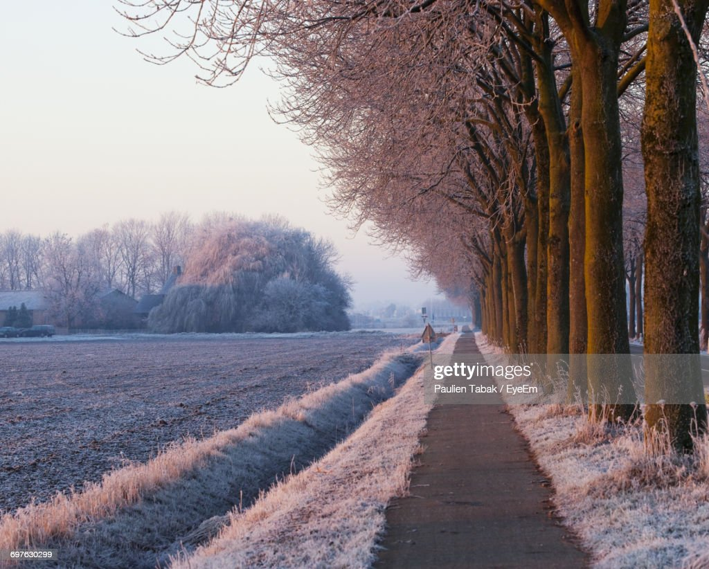 Scenic View Of Trees Against Sky : Stockfoto