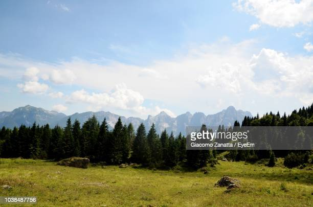 scenic view of trees and mountains against sky - conifera foto e immagini stock