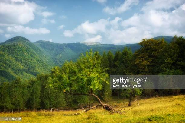 scenic view of trees and mountains against sky - alex olariu stock photos and pictures