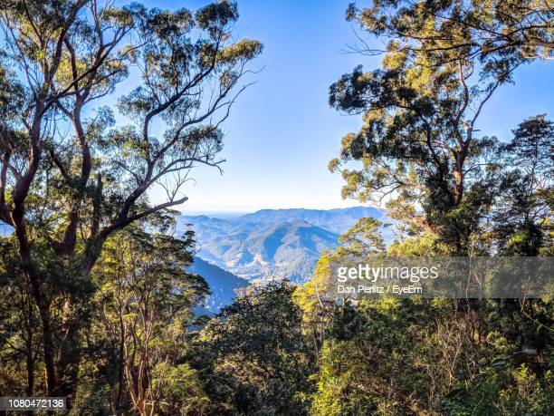 scenic view of trees and mountains against sky - dan peak stock photos and pictures