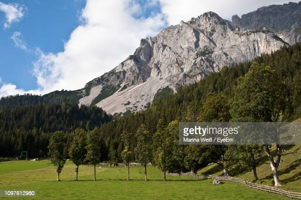 scenic view of trees and mountains against sky - weiß stock pictures, royalty-free photos & images
