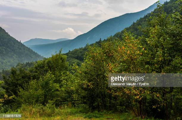 scenic view of trees and mountains against sky - oleksandr vakulin stock pictures, royalty-free photos & images