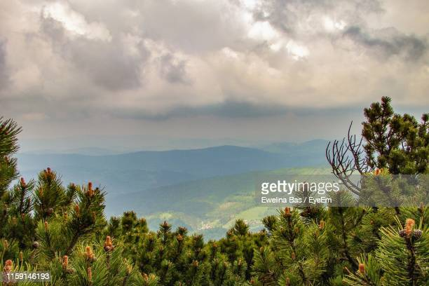 scenic view of trees and mountains against sky - babia góra mountain stock pictures, royalty-free photos & images