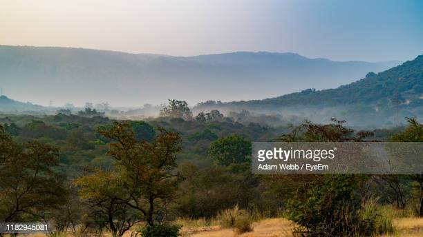 scenic view of trees and mountains against sky - ranthambore national park stock pictures, royalty-free photos & images